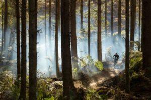 whaka-forest-gm-licensed